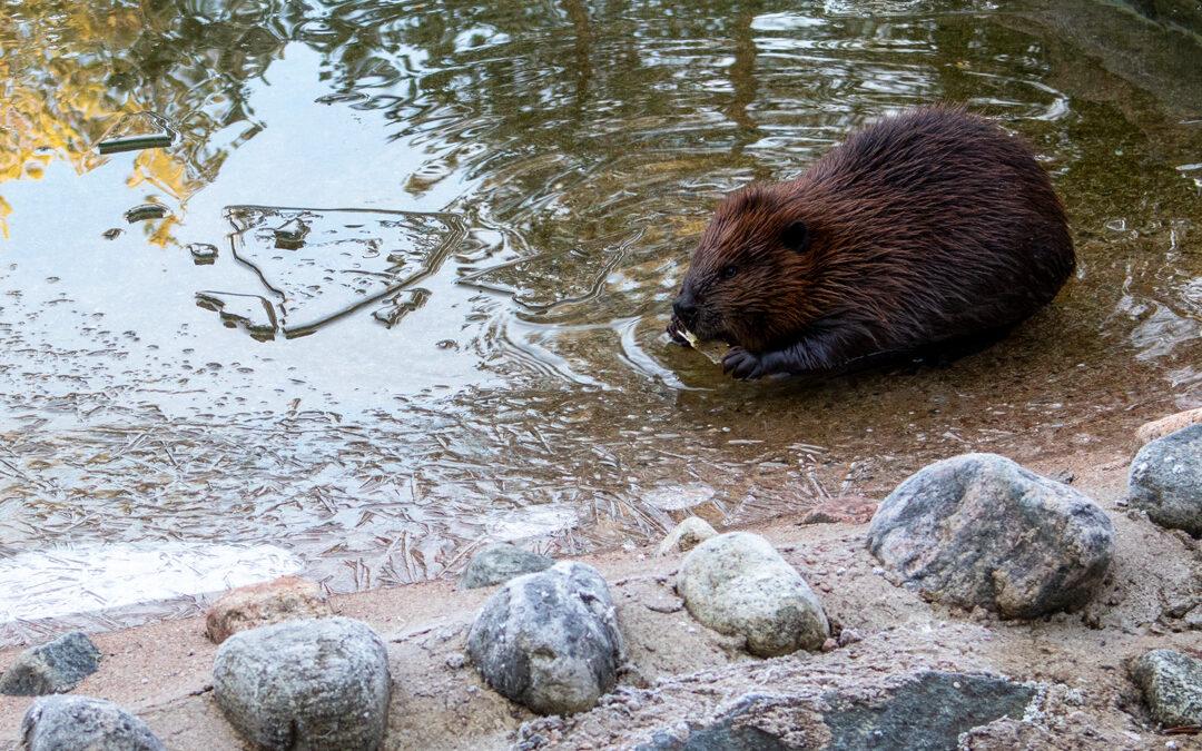Ranuan eläinpuisto, Ranua